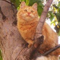 Кошки тоже умеют улыбаться :: татьяна