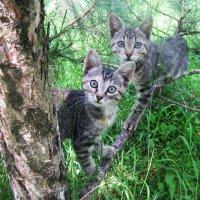 Любопытные котята :: татьяна