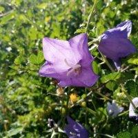 -цветы :: Nadya cat