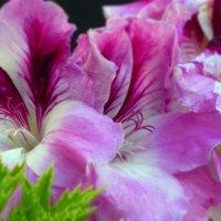 цветок-1 :: Пётр Беркун