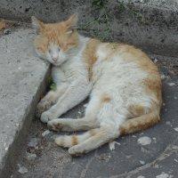 Котик спит :: Andrew
