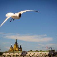 Полет над рекой :: Мария Гриднева