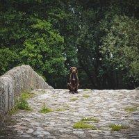 Lonely dog :: Alena Kramarenko
