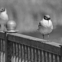 Одиночество :: Валерий Чернов