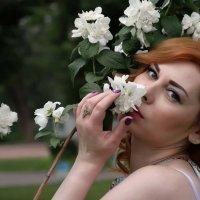 Цветы жасмина :: Александр (Алчи) Шерстнёв