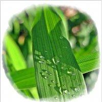 После дождичка в субботу :: muh5257
