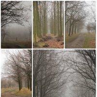 Туманный февраль :: Мария Ганджа