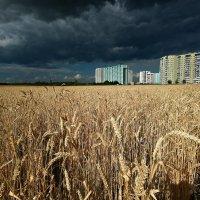 Кажется, дождь собирается... :: Сергей Гульгас
