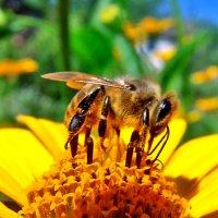 В золотой пыльце! :: Наталья