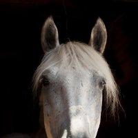 Портрет лошади :: Светлана Козлова