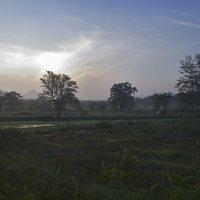 Дорога.. Утро над рисовыми полями. Цейлон.  Road. The morning of rice fields. Ceylon. :: Юрий