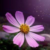 Волшебный цветок :: Ирина Мищенко