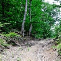 По лесным дорогам :: Виктор Шандыбин