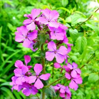Лесные цветы :: Виктор Шандыбин