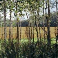 film-negativ color PROFOTO kodak 100 :: Linda Ratuta