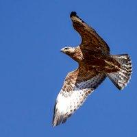 Пролетая над гнездом кукушки :: Сергей Рычков