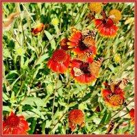 Цветы и бабочки :: Анатолий Чикчирный