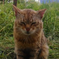 Портрет старого кота :: Владимир Ростовский