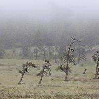 Туманы Монголии.о.Хубсугул :: Вера Петрова