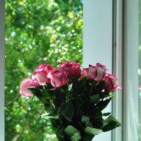 Розовые розы... :: Александр Поздеев