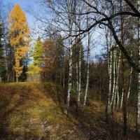 Осень в Абрамцево :: Владимир Брагилевский