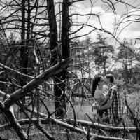 лес :: Лилия Винер