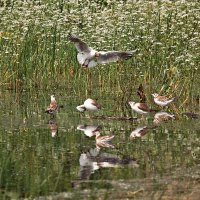 Детский сад озерной чайки :: Татьяна Губина