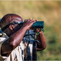 Проводник в саванне...Танзания! :: Александр Вивчарик
