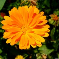 Оранжевое солнце :: °•●Елена●•° Аникина♀