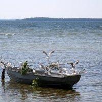 озеро Нарочь :: vasya-starik Старик