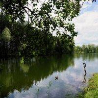 Стою у кромки леса... :: Наталия Григорьева