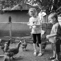 Сельская жизнь :: Ольга Мартынюк