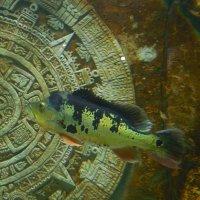 Подводный мир :: Мила