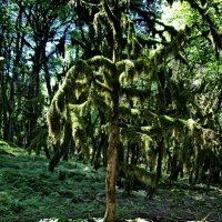 Самшитовый лес :: Николай