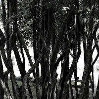 почти бамбук :: Евгений Боев