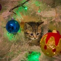Новогодний подарок :: Сергей Щеглов
