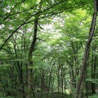 В лиственном лесу :: valeriy khlopunov