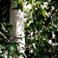 и  тенями на стволе играют  листочки... :: Валерия  Полещикова