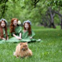 Рыжий котик в парке :: Ира Никина