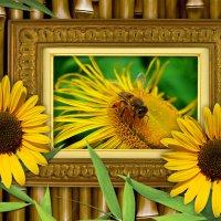 Из жизни одной пчёлки :: Nina Yudicheva