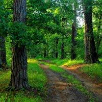 Лесной судьбой спешит дорога... :: Лесо-Вед (Баранов)