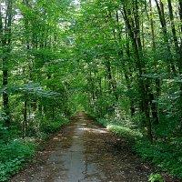 аллея в лесо-парке :: megaden774