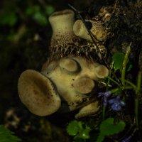 Марсианский гриб :: Елена Яшнева