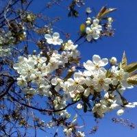Немного из весны :: veera (veerra)
