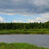 Летний пейзаж с чайками на озере :: Милешкин Владимир Алексеевич