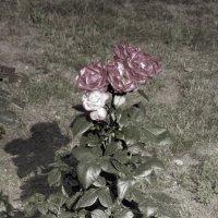 Июльские цветы :: Aнна Зарубина