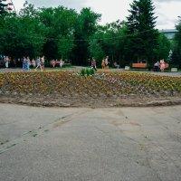 Клумба в парке :: Света Кондрашова