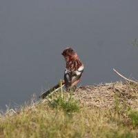 урагус на берегу реки :: Анна