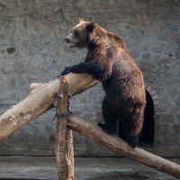 Медвежьи забавы :: Валерий Голоха