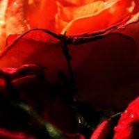 Покоя не дают мне розы.... :: Валерия  Полещикова